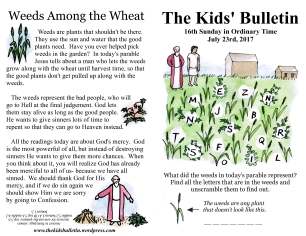 The Kids' Bulletin 16th Sunday